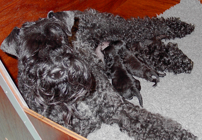 Puppies 1 week old.